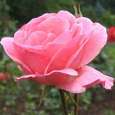 floare.jpg